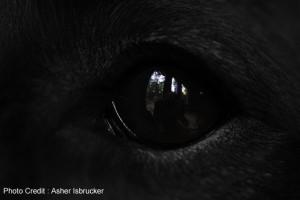 dogeye-blackfur