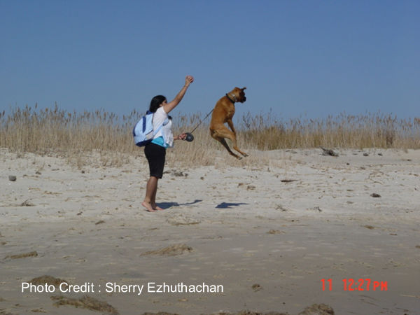 boxer flying